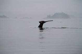 Walflosse Kanada