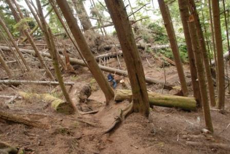 Juan de Fuca Trail, Waldweg