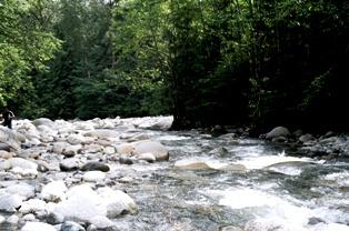 Lynn Canyon, Nord Vancouver