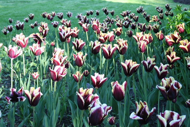 Queen Elizabeth Park im Frühling