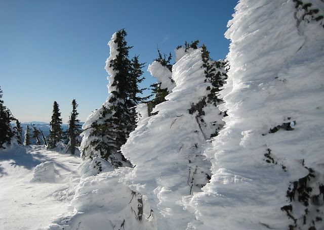 Big White Eisbaeume