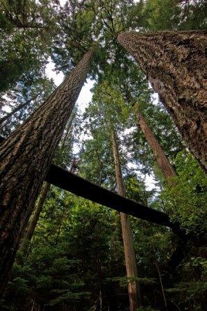Capilano Park, Treetops
