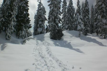 Cypress Mountain Schneeschuhlaufen
