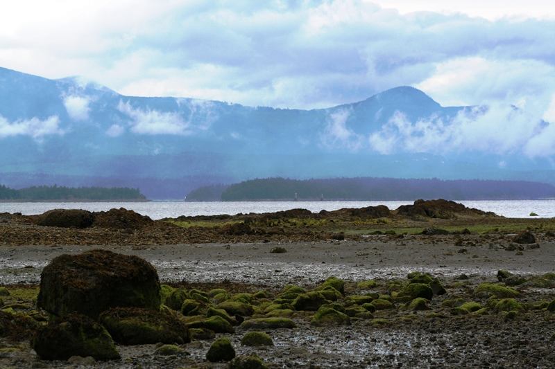 Ebbe - Salt Spring Island