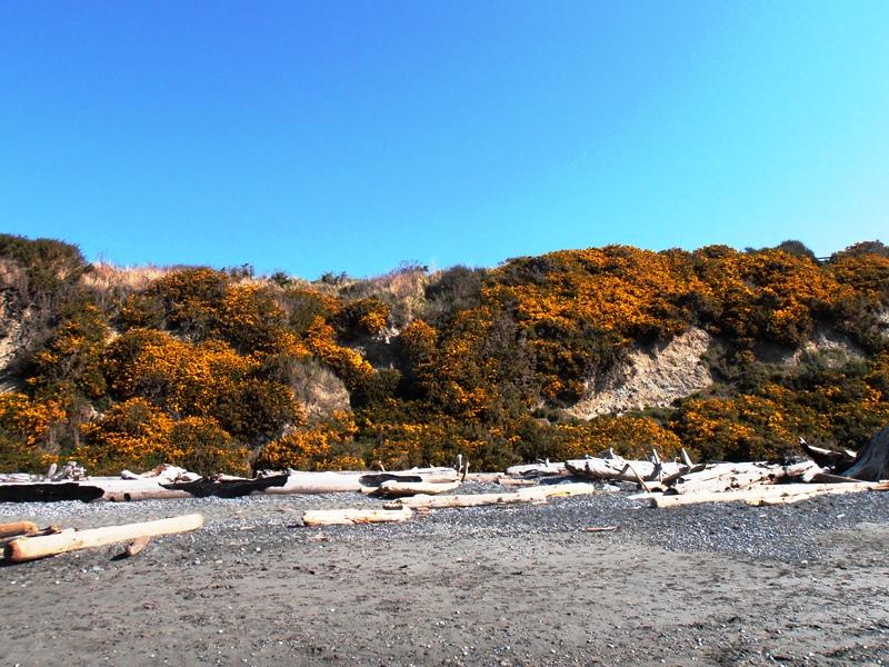 Küste Victoria, Beacon Hill Park