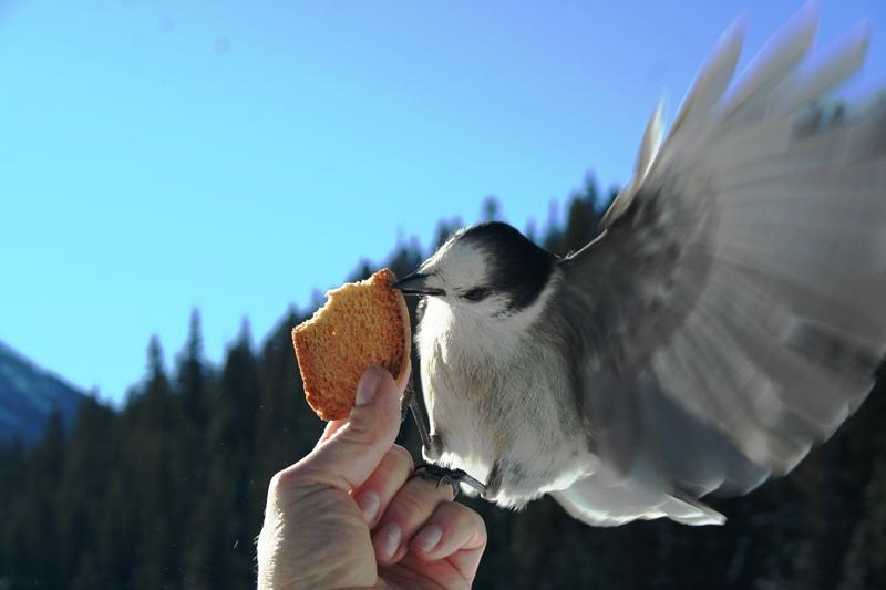 Manning Park Bird