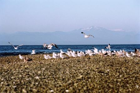 Moewen Vancouver Island