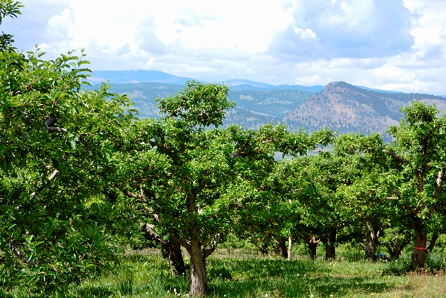 Okanagan Obstbäume