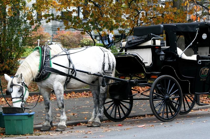 Victoria, BC - Pferdekutsche