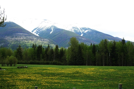 Rocky Mountains Wiese